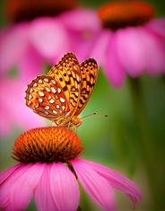 flower-butterfly