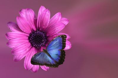 flower-2019057_1920